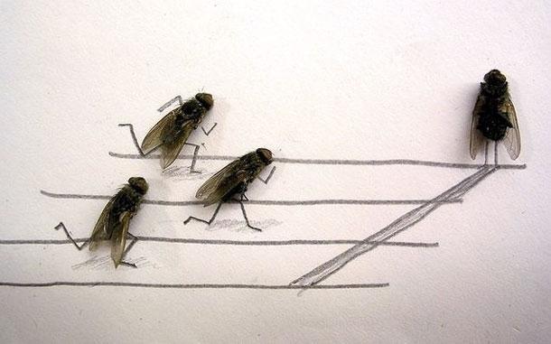 Dead Fly Art: Cool or Weird?