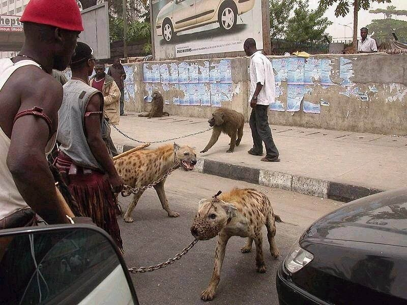 The Hyena Handlers of Nigeria