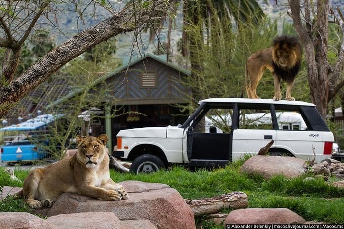 Best Zoo in America