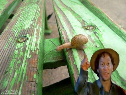 Snails stretch across table gap