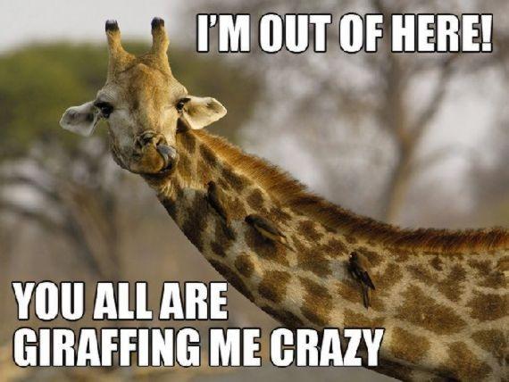Hilarious Animal Puns