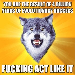 Best of Courage Wolf