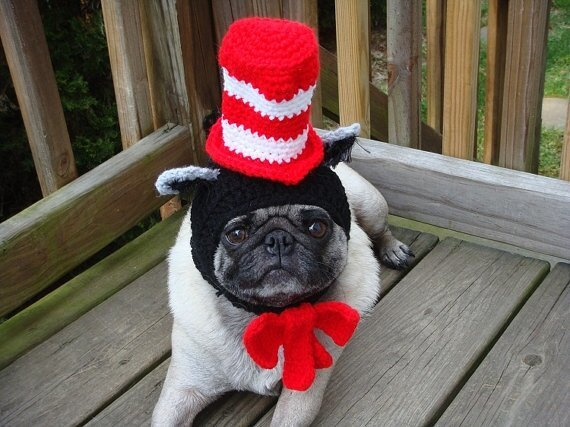 Hilarious Fashion Accessories For Your Dog