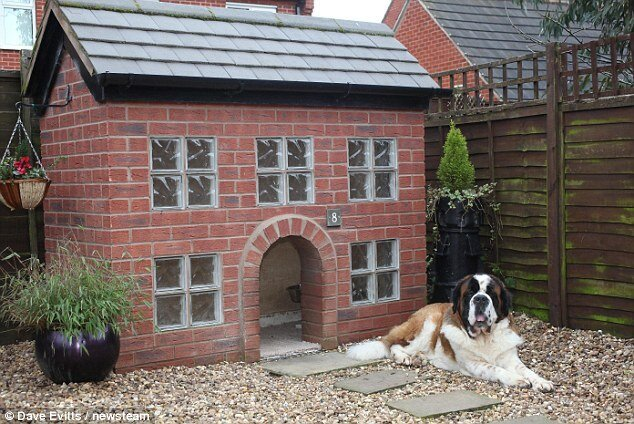 A Cool House For a Dog