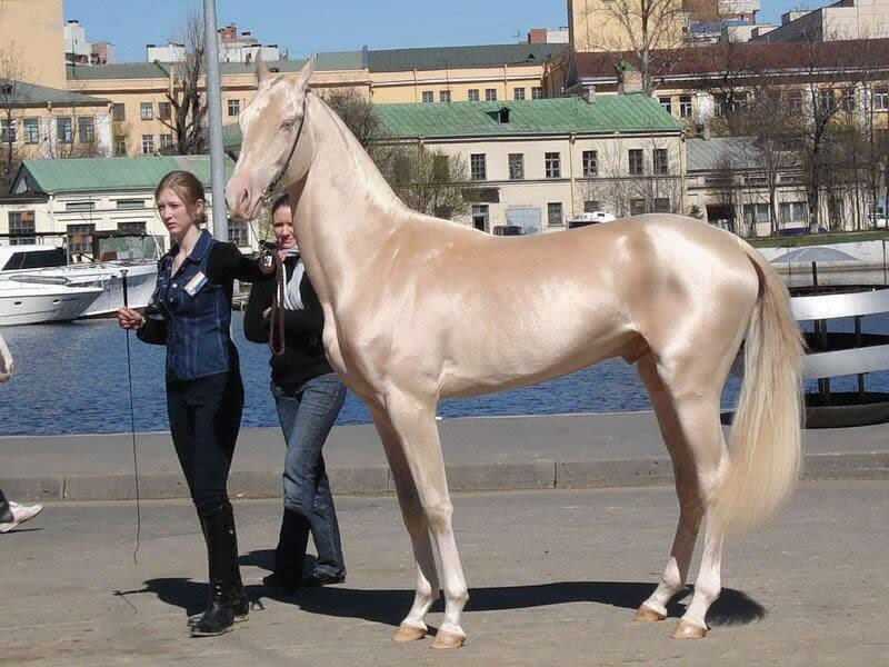 How Is This Horse Real?!
