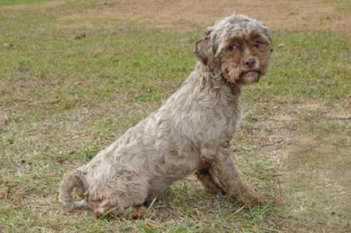 This Dog Has The Face of a Man
