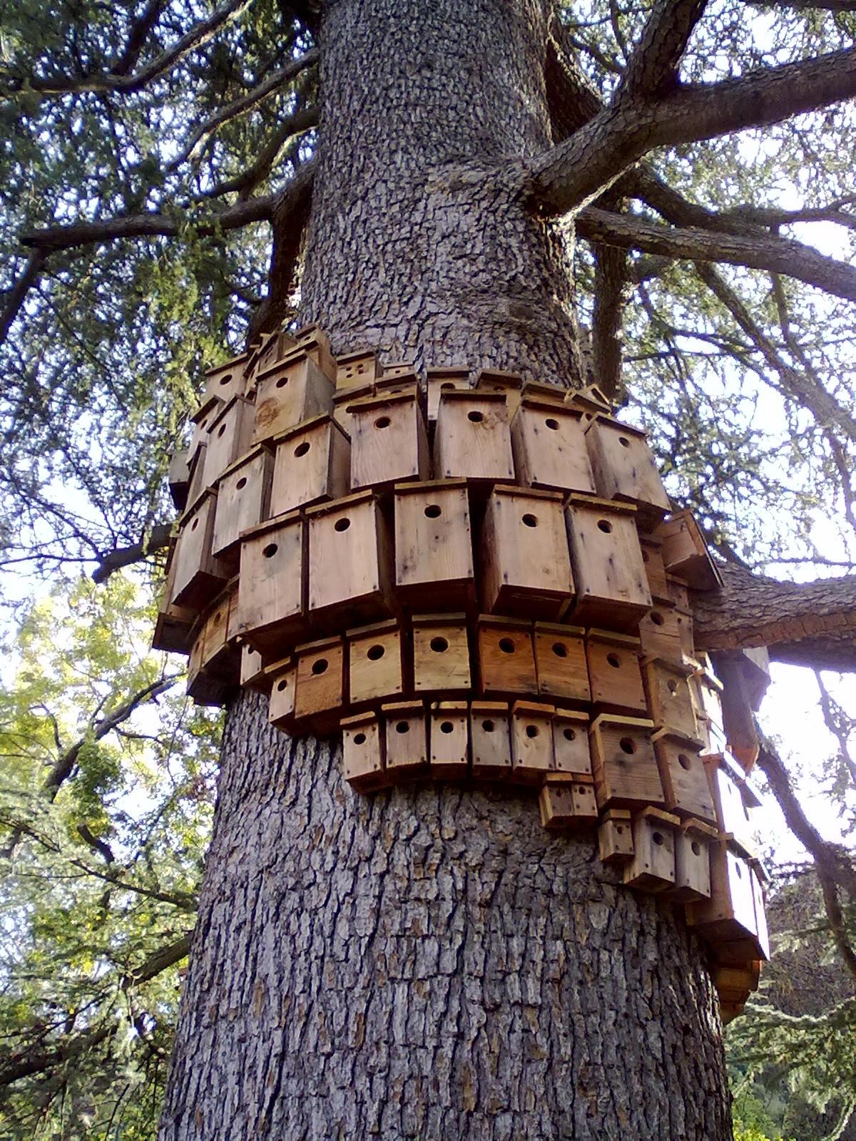 Unique Creative Bird Houses.