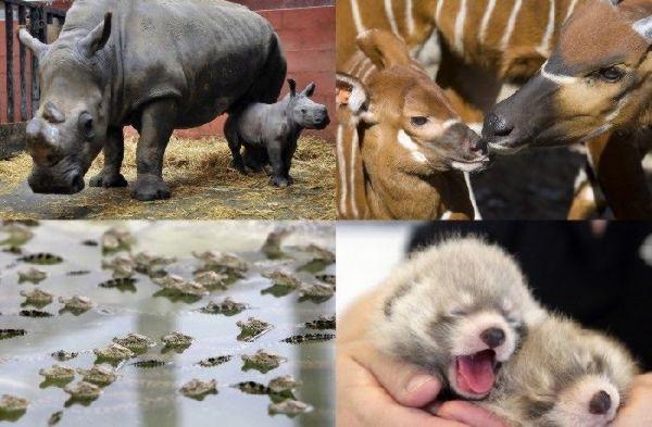 Baby Animals From Around The World
