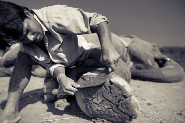Elephant Pedicure