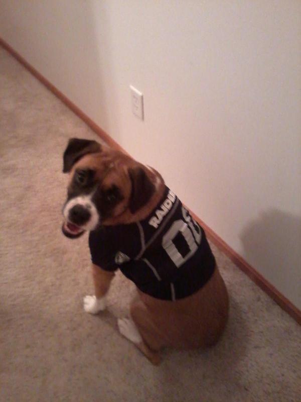 Dogs in Football Jerseys! How Cute