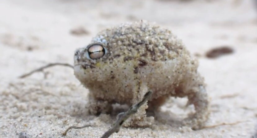 The Squeakiest and Most Adorable Frog Ever!