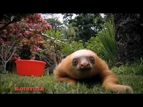 The Sloths are Coming!