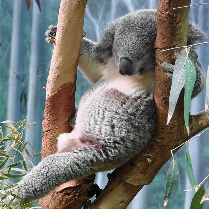 The Cutest Sleepy Animals That Will Make Your Day!