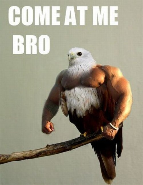 The Best Of Come At Me Bro's!