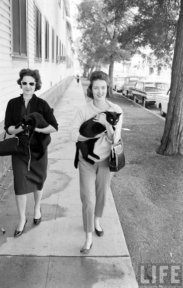 Black Cat Auditions in Hollywood (1961)