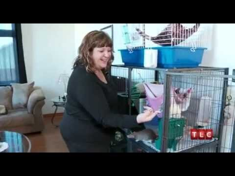 Obsessed Woman Leaves Husband For Her 19 Rats (video)