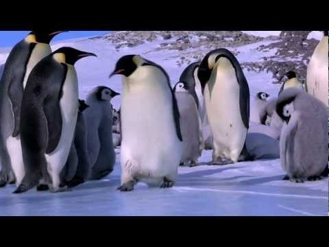 Penguin Fails, Funny Penguin Bloopers (Video)