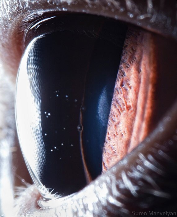 Amazing Animal Close-Up Eye Photography By Suren Manvelyan