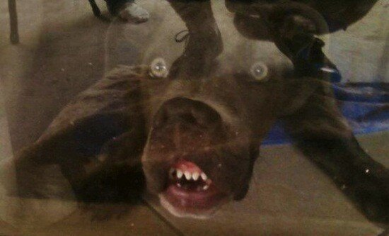 Dogs Pressing Their Face On Windows