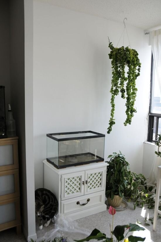 DIY Green Garden Wall