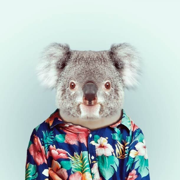 Funny Zoo Portraits by Yago Partal