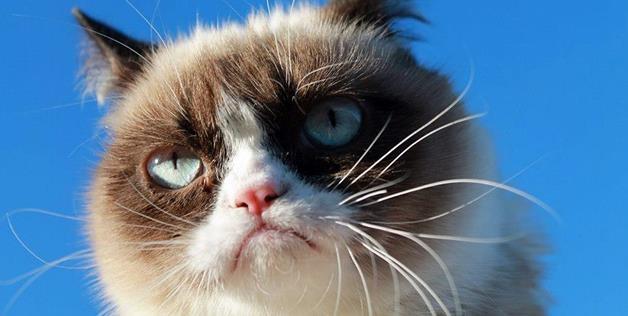 Animals Grumpier Than Grumpy Cat