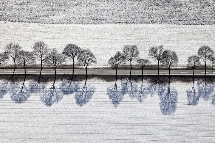 Breathtaking Blue Shadows of Barren Winter Trees By  Klaus Leidorf