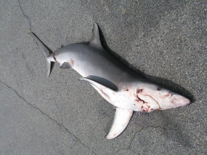 Shark Fell Down from the Sky