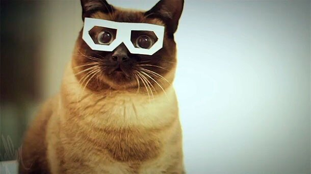 Skifcha The Amazing Dubstep Hipster Cat! (Video)