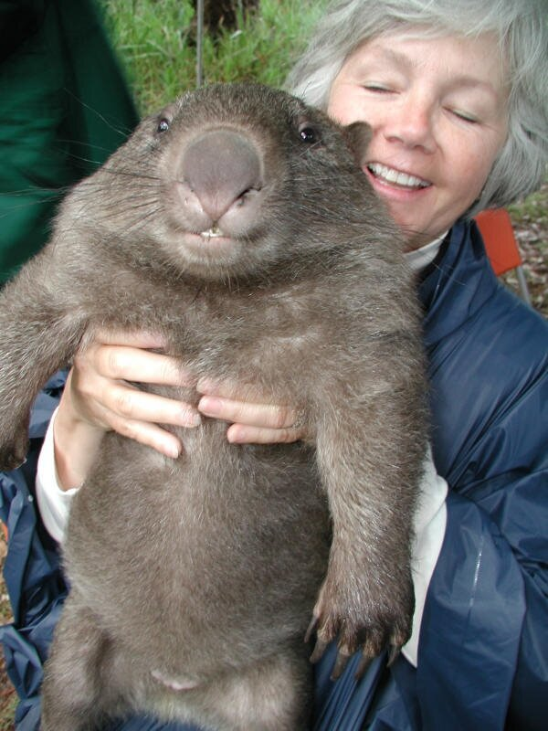 Get Ready To Be Awwwed Away! Too Cute Wombats