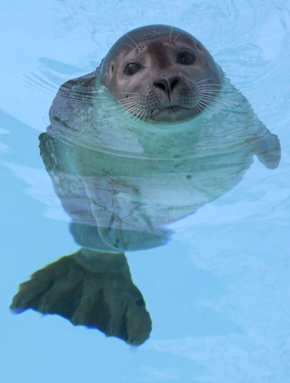 "Injured Seal ""Pup 49"" Learns To Swim Again"