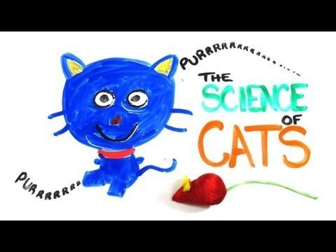 The Science Of Cats, Everything You Need To Know In 3 minutes
