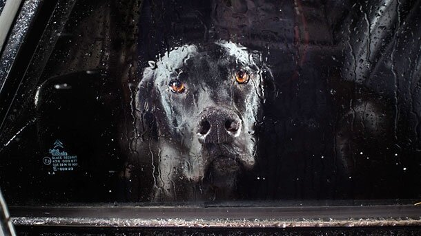 Haunting & Evocative Photos Of Dogs Left Abandoned In Cars