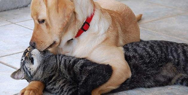Photos Of Animals In Love Are Way Too Adorable