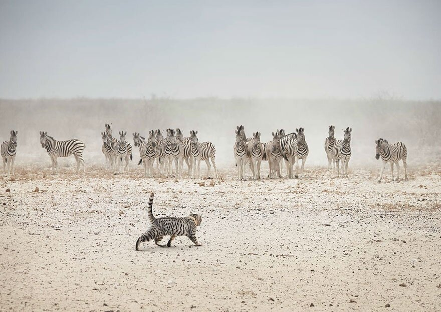 Domestic Cats Photoshopped into the Wild
