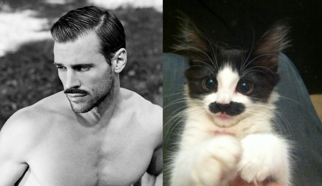Tumblr Alert: Cats That Look Like Male Models