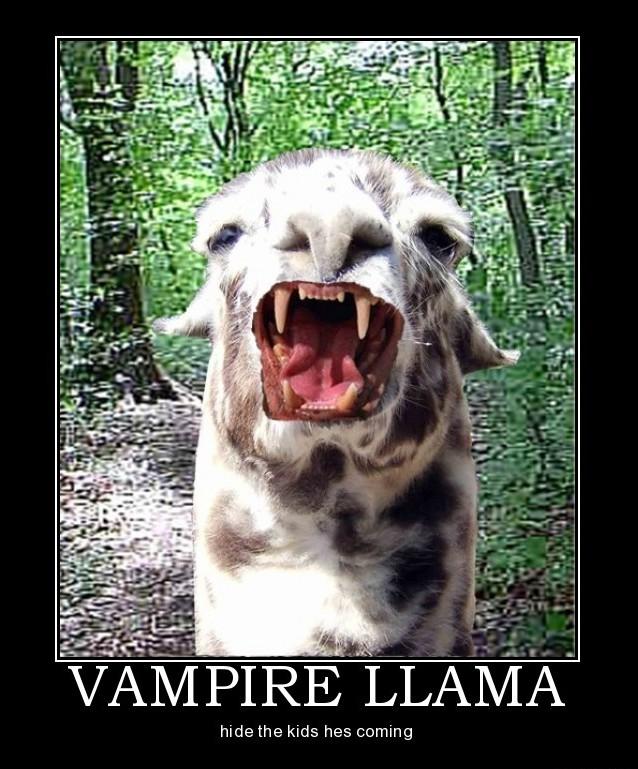 Good Ole' Llama Fun!