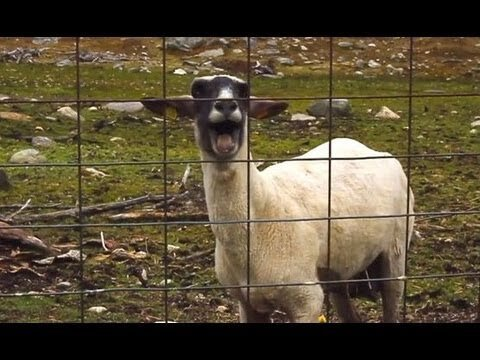 Hilarious Animals Behaving Like Humans Compilation Video
