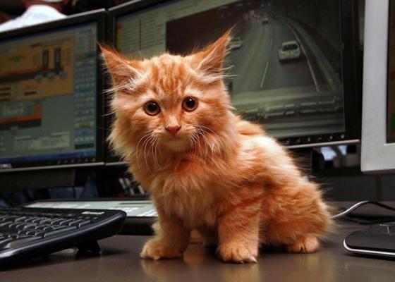 Kitten found in the Burnley Tunnel, Melbourne