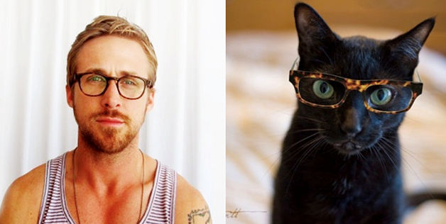 These Funny Cats Want To Work As Male Models