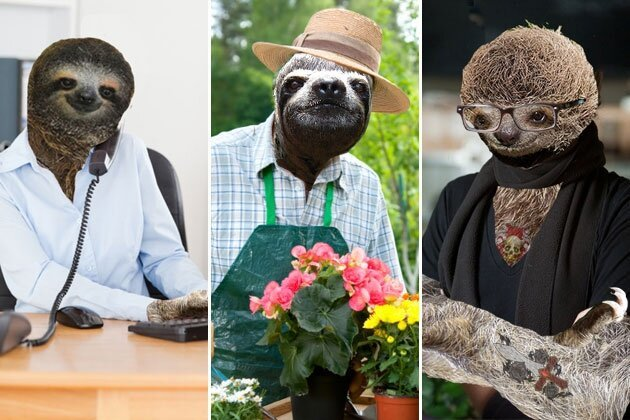 9 Sloths Who Are Working for the Weekend