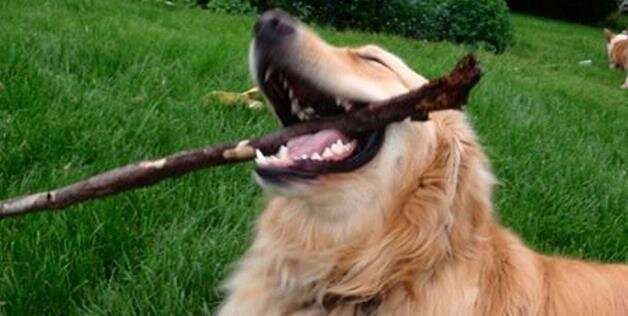Happy Dog: Dogs Love Life