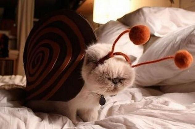 24 Cats That Really Deserve an Apology