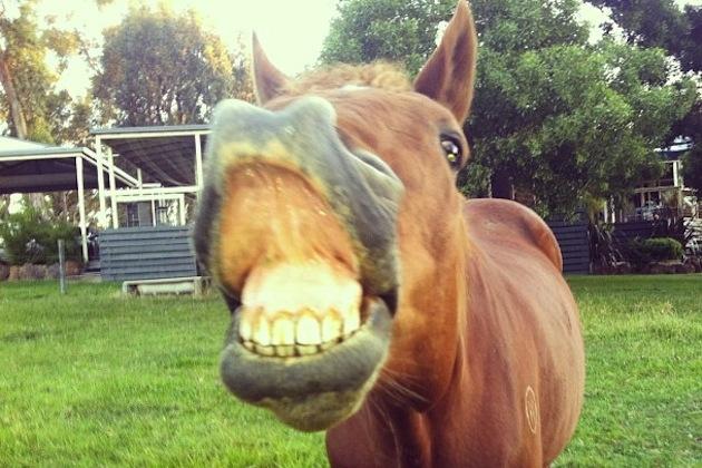 10 Smiling Horses Guaranteed To Make You Smile, Too