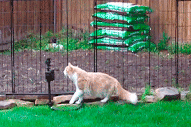 10 Sprinkler GIFs to Get Us in the Summer Mood