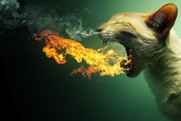 Dragon Cat and Other Awesome Photo Manipulations of Animals