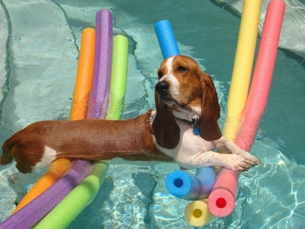Dogs That Are Ready For Summer