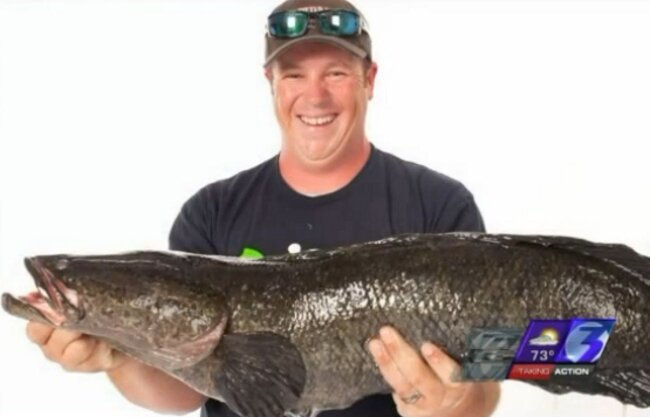 A Virginia Man Set The World Record For Catching A 'Frankenfish'