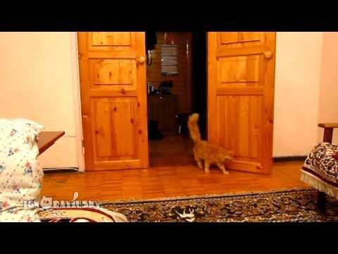 Cat Scared of Super Mario Jump - Video