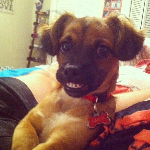 Grinning Dogs Will Make You Smile